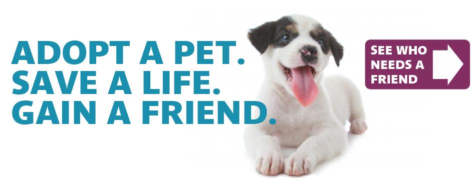 Save Me Dog Rescue Rescue